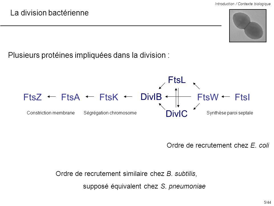 FtsL FtsZ FtsA FtsK DivIB FtsW FtsI DivIC La division bactérienne