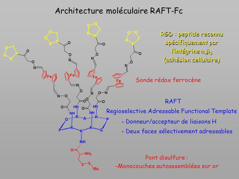 Architecture moléculaire RAFT-Fc