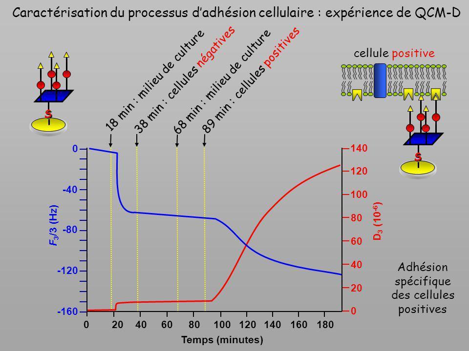 Caractérisation du processus d'adhésion cellulaire : expérience de QCM-D