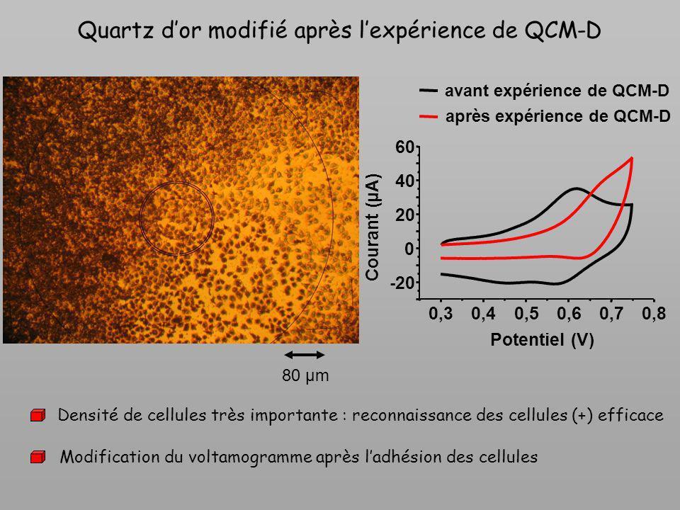 Quartz d'or modifié après l'expérience de QCM-D