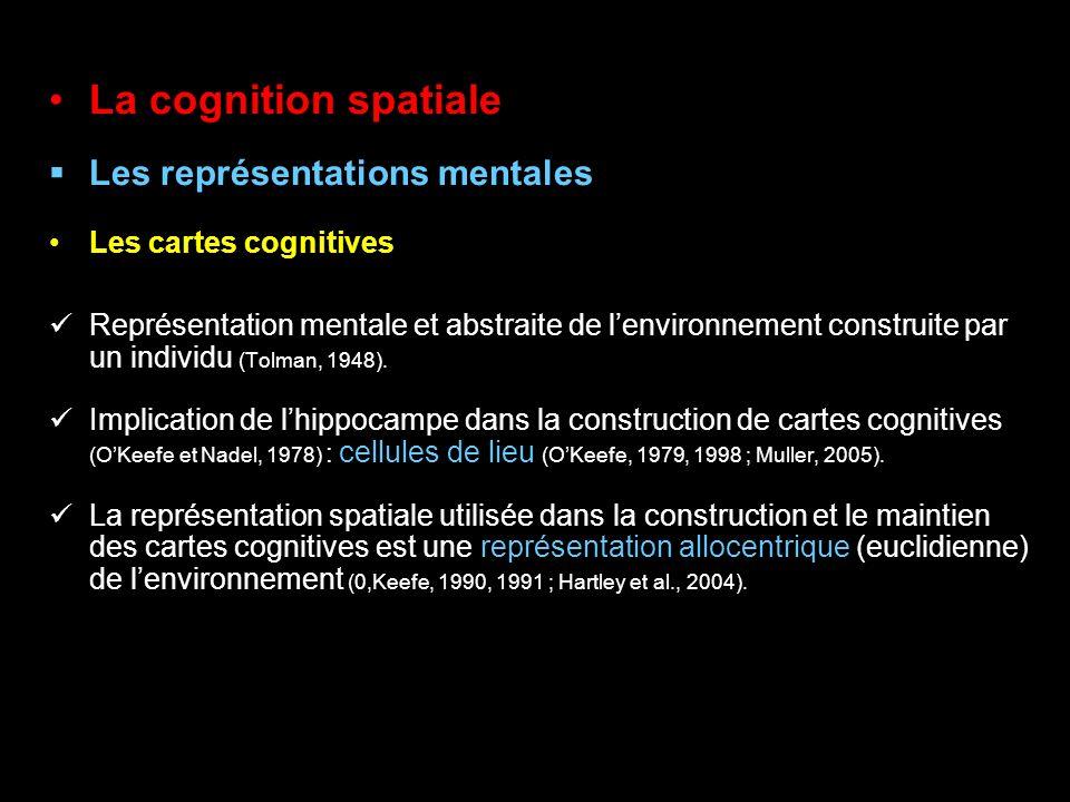 La cognition spatiale Les représentations mentales