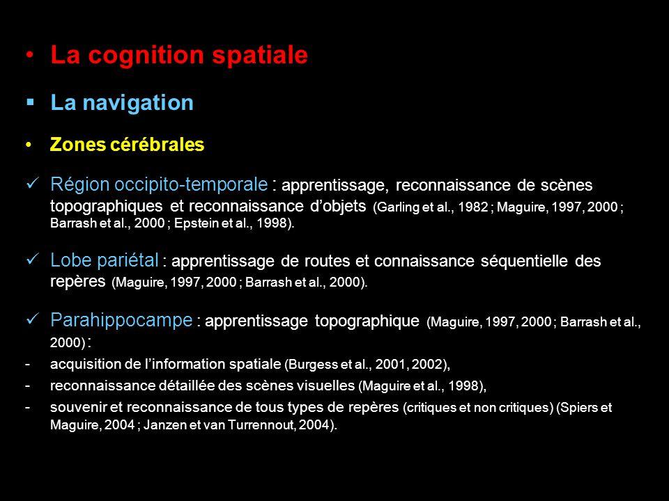 La cognition spatiale La navigation Zones cérébrales