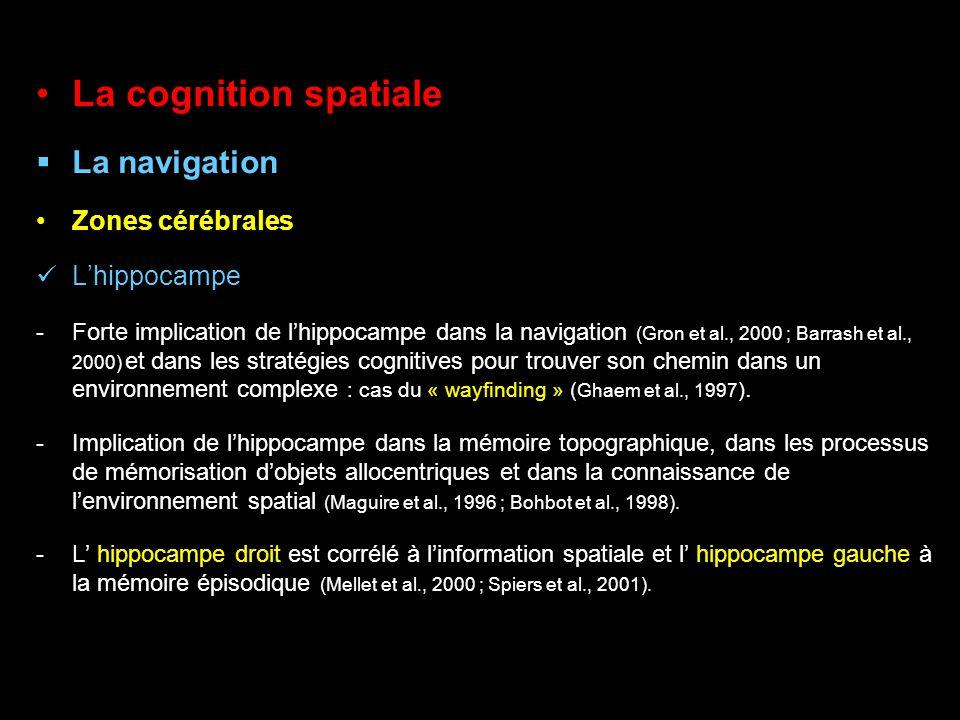 La cognition spatiale La navigation Zones cérébrales L'hippocampe