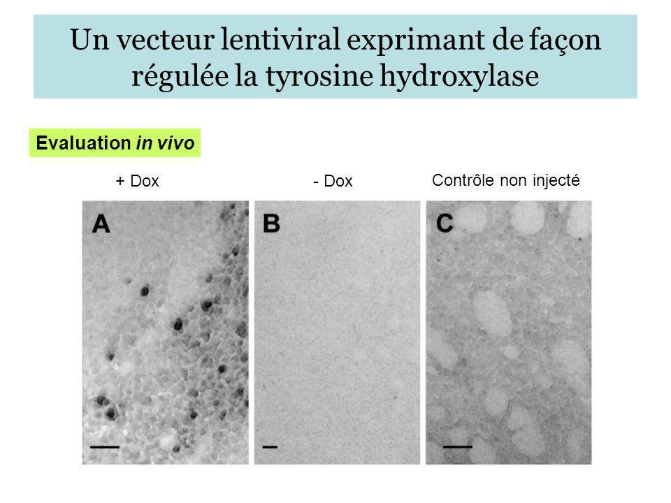Un vecteur lentiviral exprimant de façon régulée la tyrosine hydroxylase