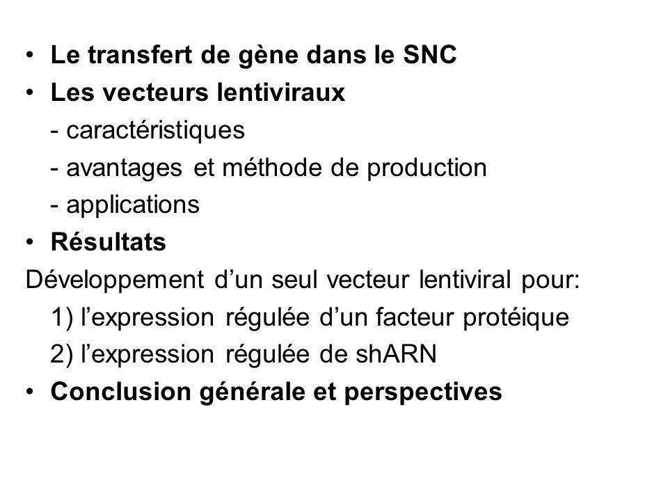 Le transfert de gène dans le SNC