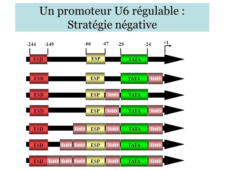 Un promoteur U6 régulable : Stratégie négative