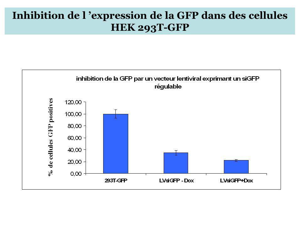Inhibition de l 'expression de la GFP dans des cellules HEK 293T-GFP