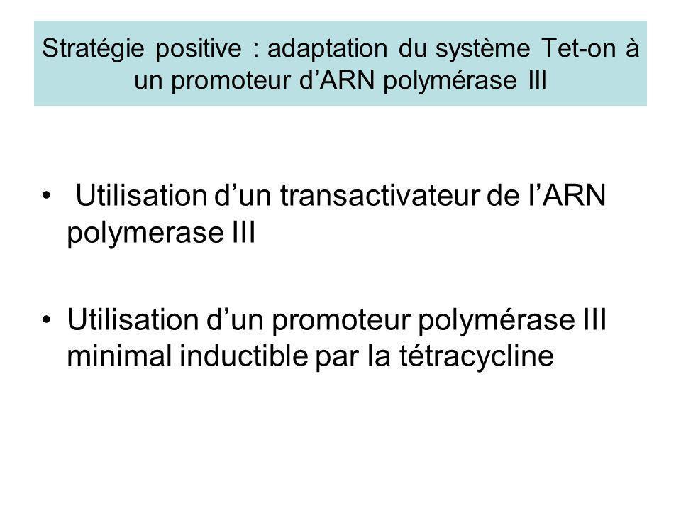 Utilisation d'un transactivateur de l'ARN polymerase III