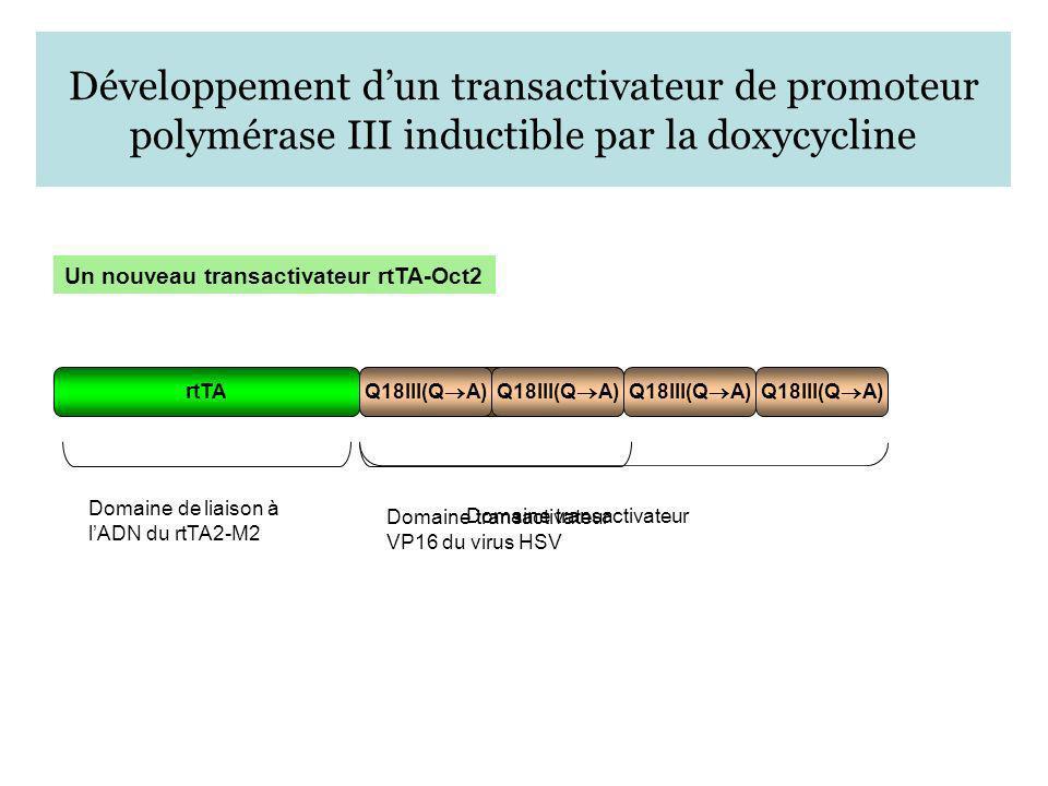 Développement d'un transactivateur de promoteur polymérase III inductible par la doxycycline