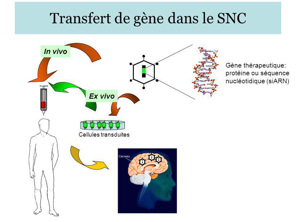 Transfert de gène dans le SNC