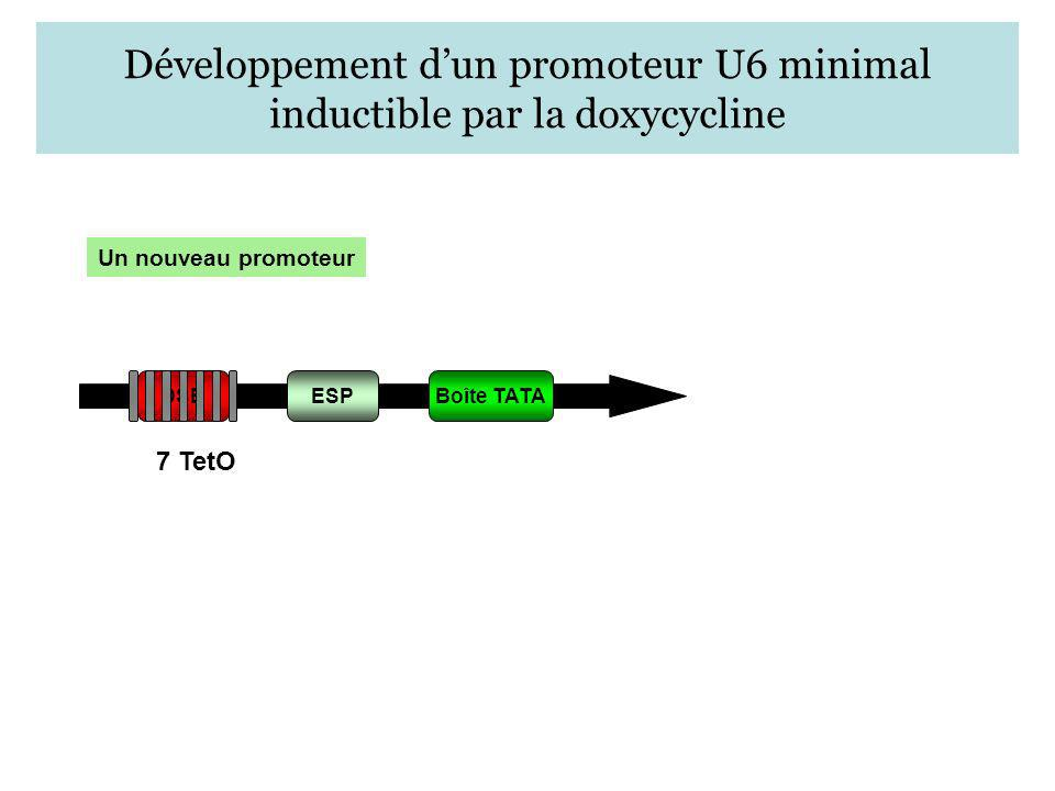Développement d'un promoteur U6 minimal inductible par la doxycycline