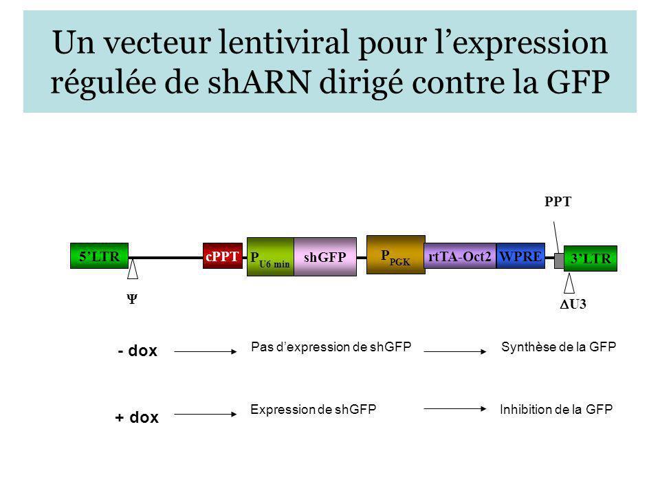 Un vecteur lentiviral pour l'expression régulée de shARN dirigé contre la GFP