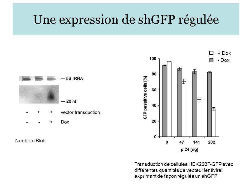 Une expression de shGFP régulée
