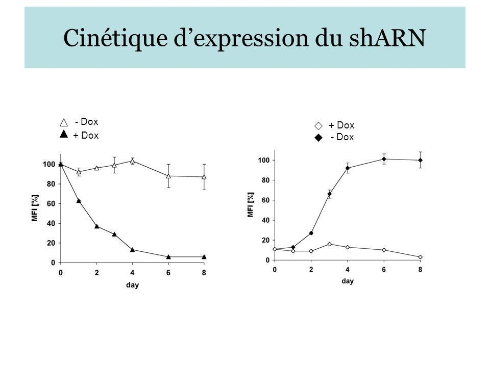 Cinétique d'expression du shARN