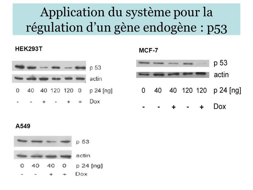 Application du système pour la régulation d'un gène endogène : p53