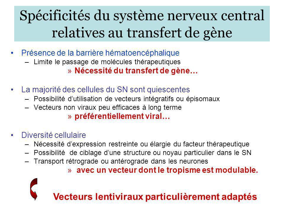 Spécificités du système nerveux central relatives au transfert de gène