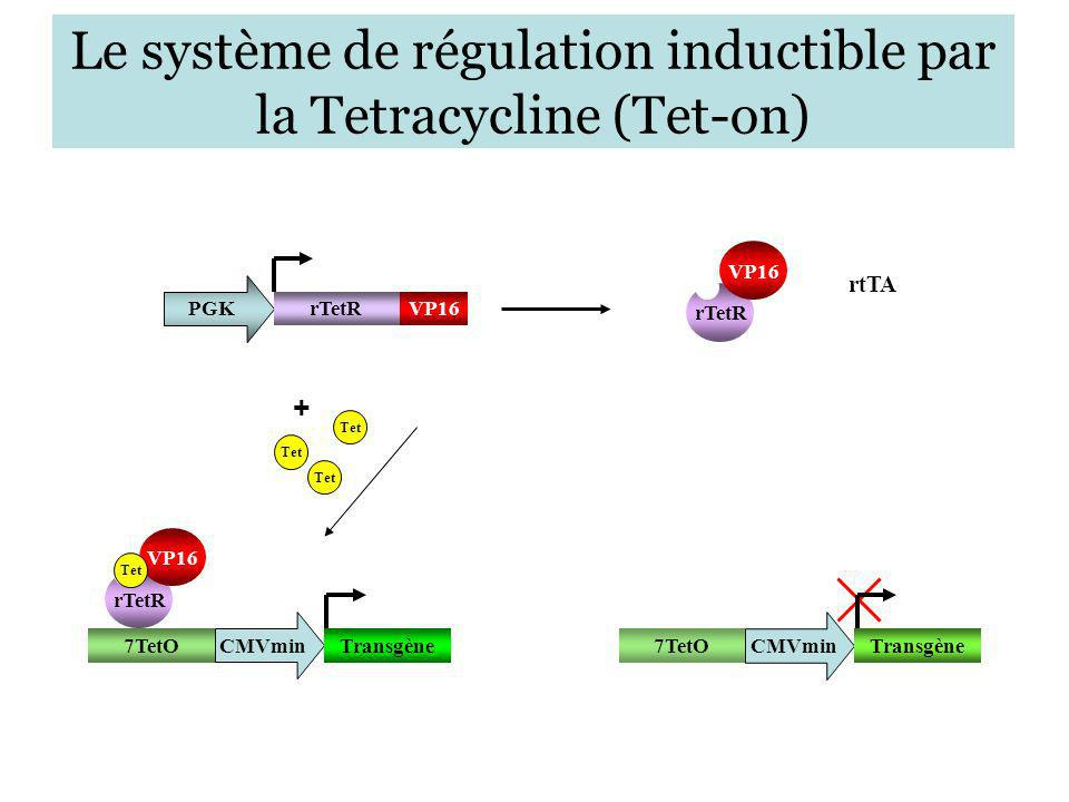 Le système de régulation inductible par la Tetracycline (Tet-on)