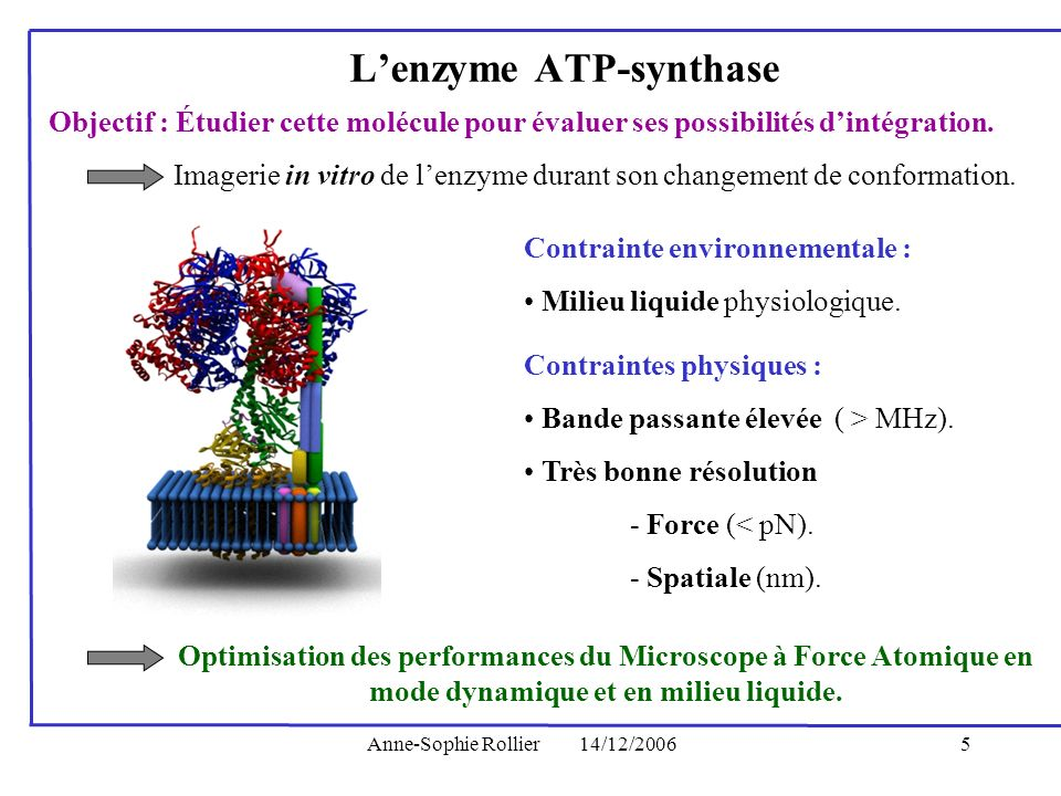 L'enzyme ATP-synthase
