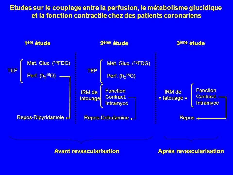 Etudes sur le couplage entre la perfusion, le métabolisme glucidique