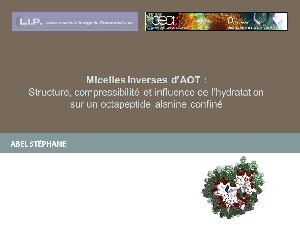 sur un octapeptide alanine confiné