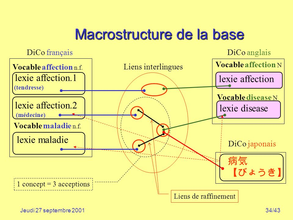 Macrostructure de la base