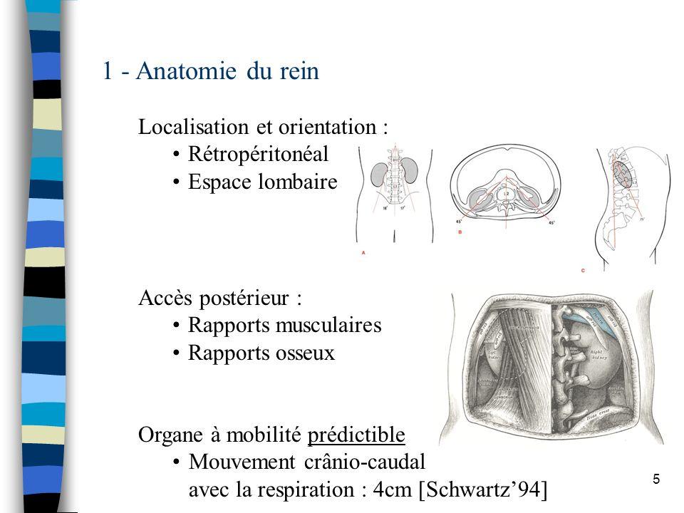 1 - Anatomie du rein Localisation et orientation : Rétropéritonéal