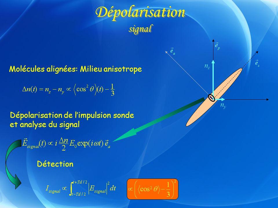 Dépolarisation signal