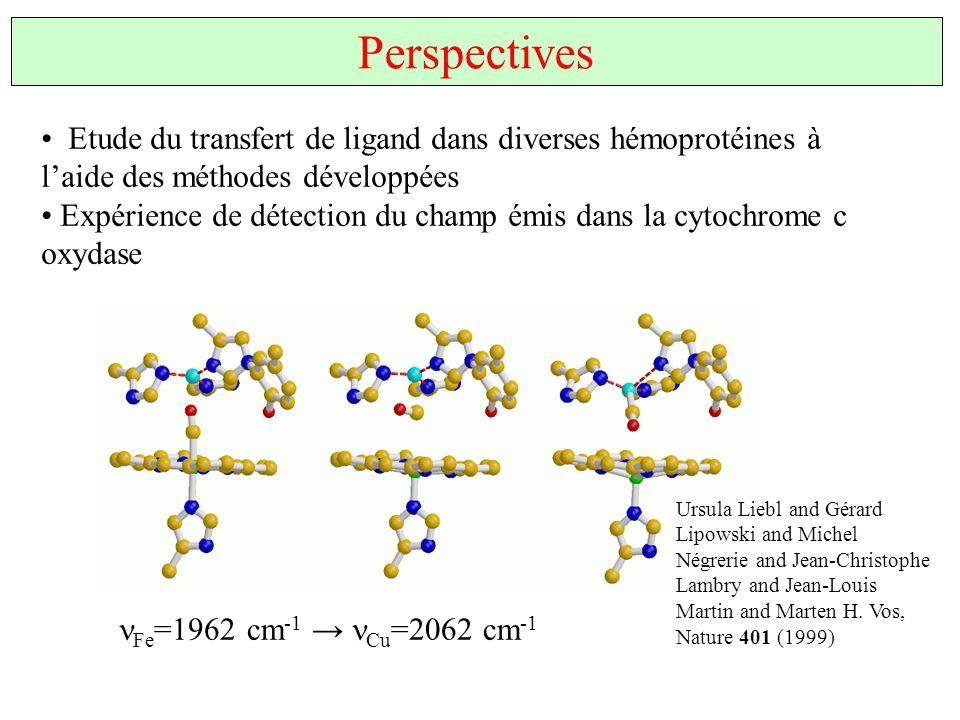 Perspectives Etude du transfert de ligand dans diverses hémoprotéines à l'aide des méthodes développées.