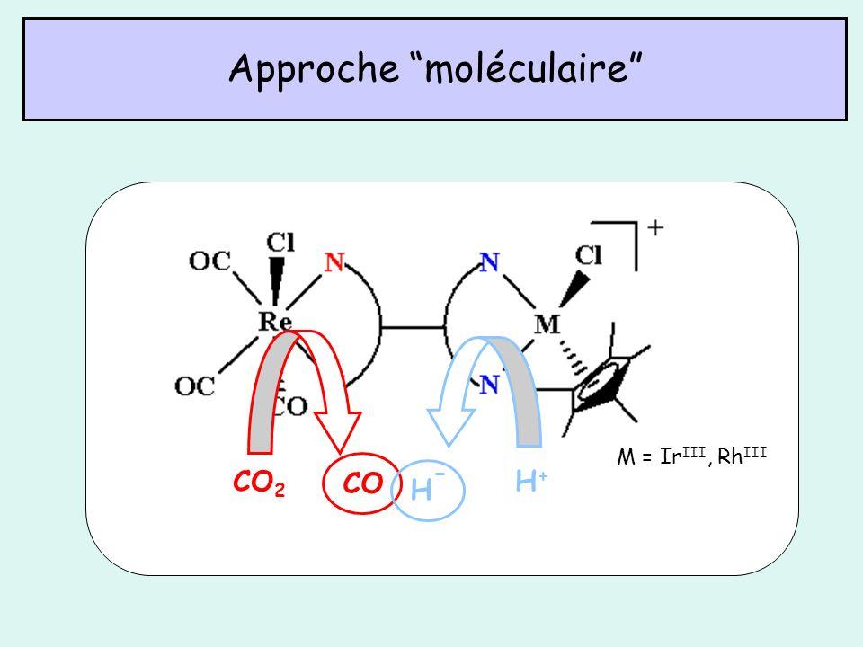Approche moléculaire