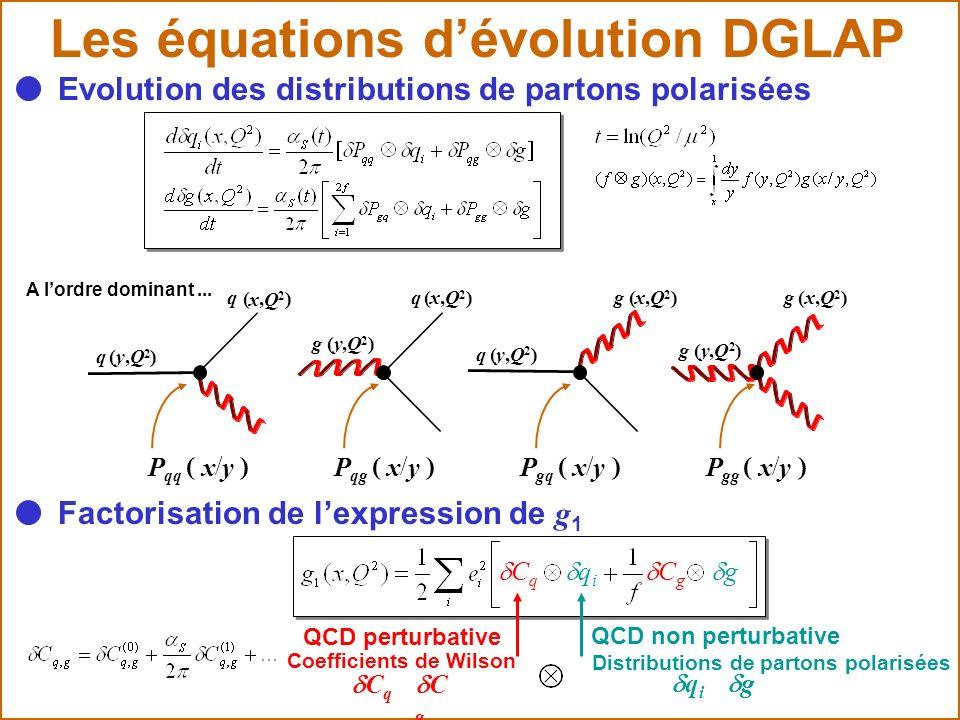 Les équations d'évolution DGLAP