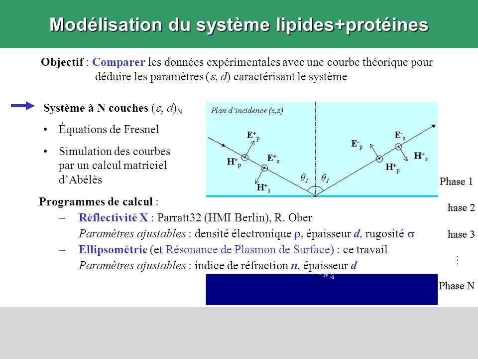 Modélisation du système lipides+protéines
