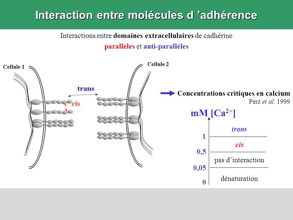 Interaction entre molécules d 'adhérence