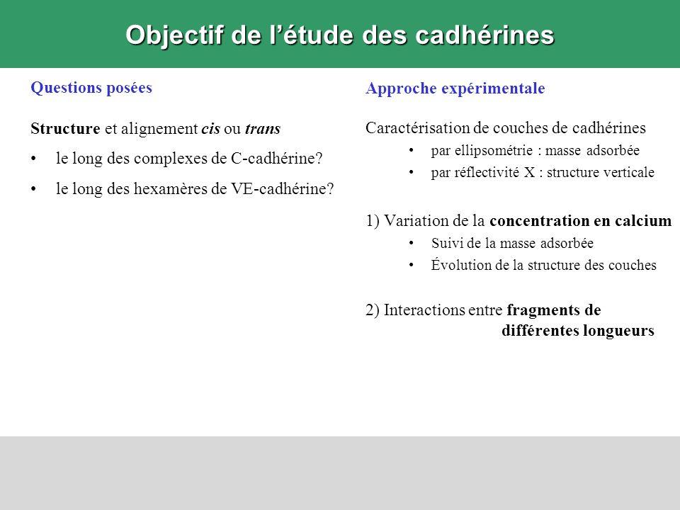 Objectif de l'étude des cadhérines