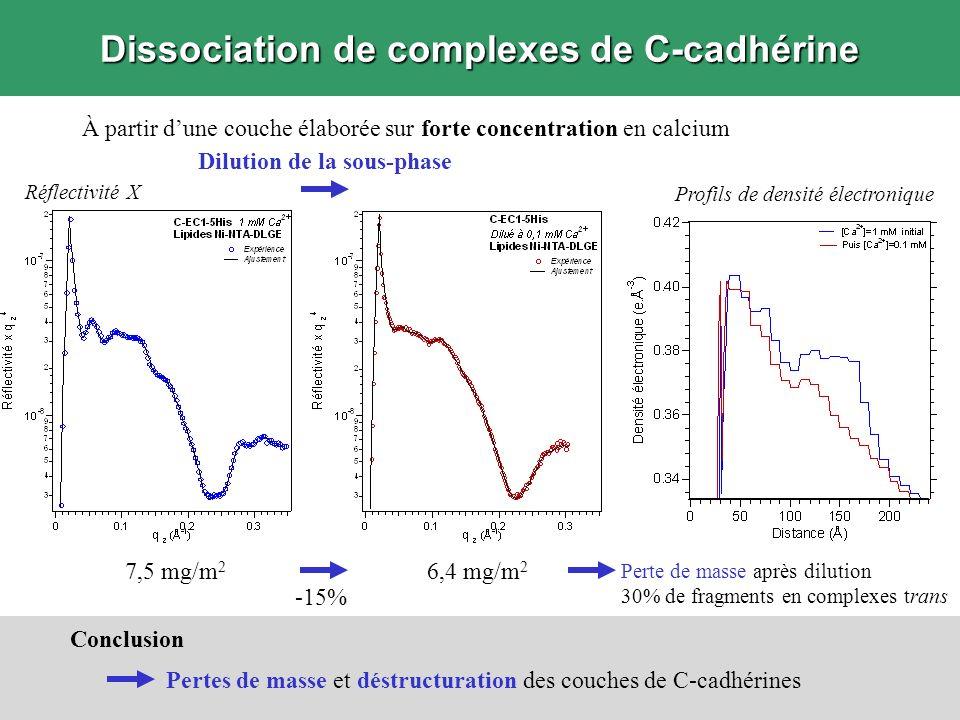 Dissociation de complexes de C-cadhérine