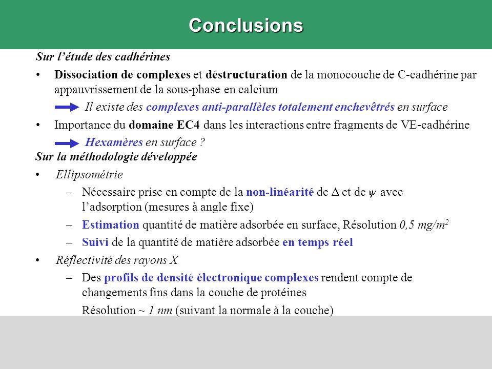 Conclusions Sur l'étude des cadhérines