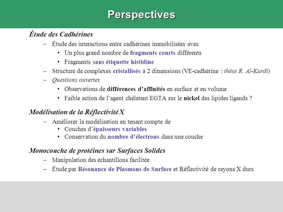 Perspectives Étude des Cadhérines Modélisation de la Réflectivité X