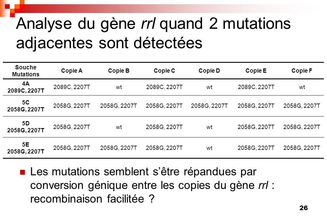 Analyse du gène rrl quand 2 mutations adjacentes sont détectées