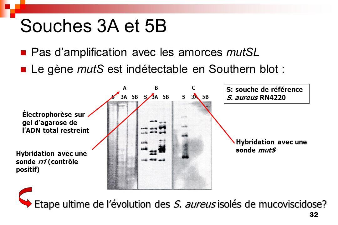 Souches 3A et 5B Pas d'amplification avec les amorces mutSL