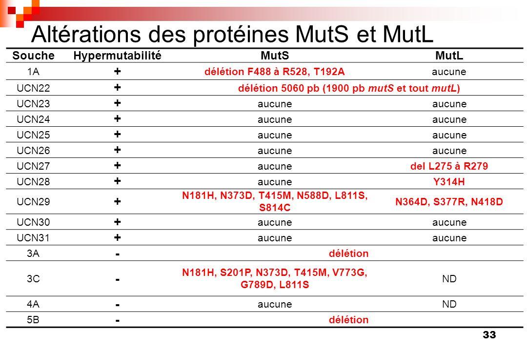 Altérations des protéines MutS et MutL