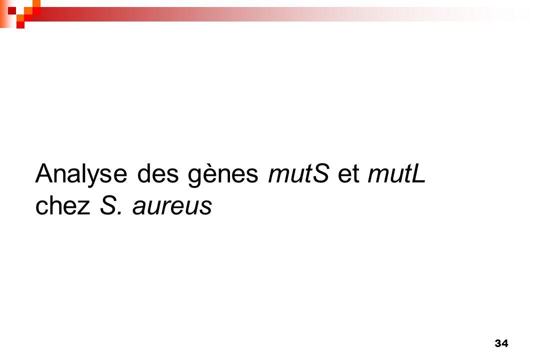 Analyse des gènes mutS et mutL chez S. aureus