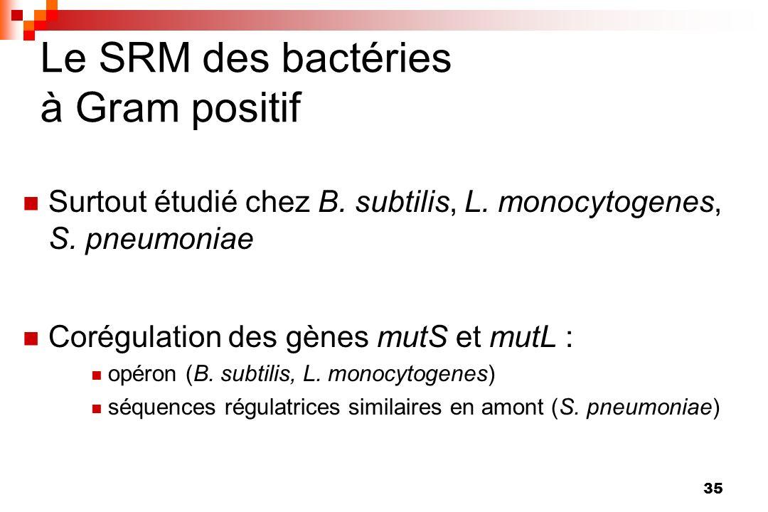 Le SRM des bactéries à Gram positif