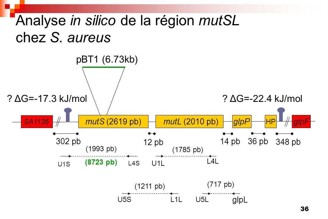 Analyse in silico de la région mutSL chez S. aureus