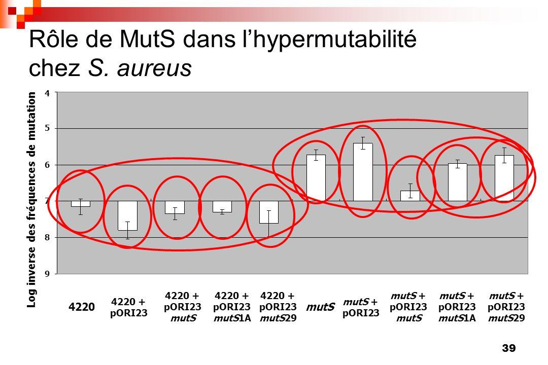 Rôle de MutS dans l'hypermutabilité chez S. aureus