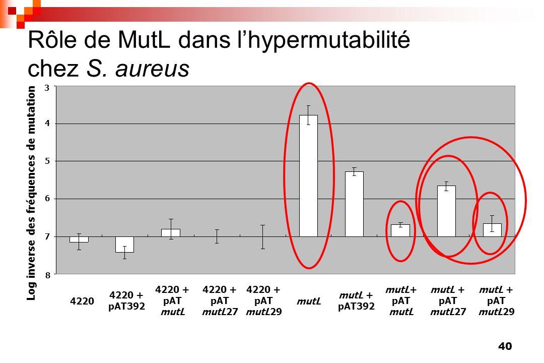Rôle de MutL dans l'hypermutabilité chez S. aureus