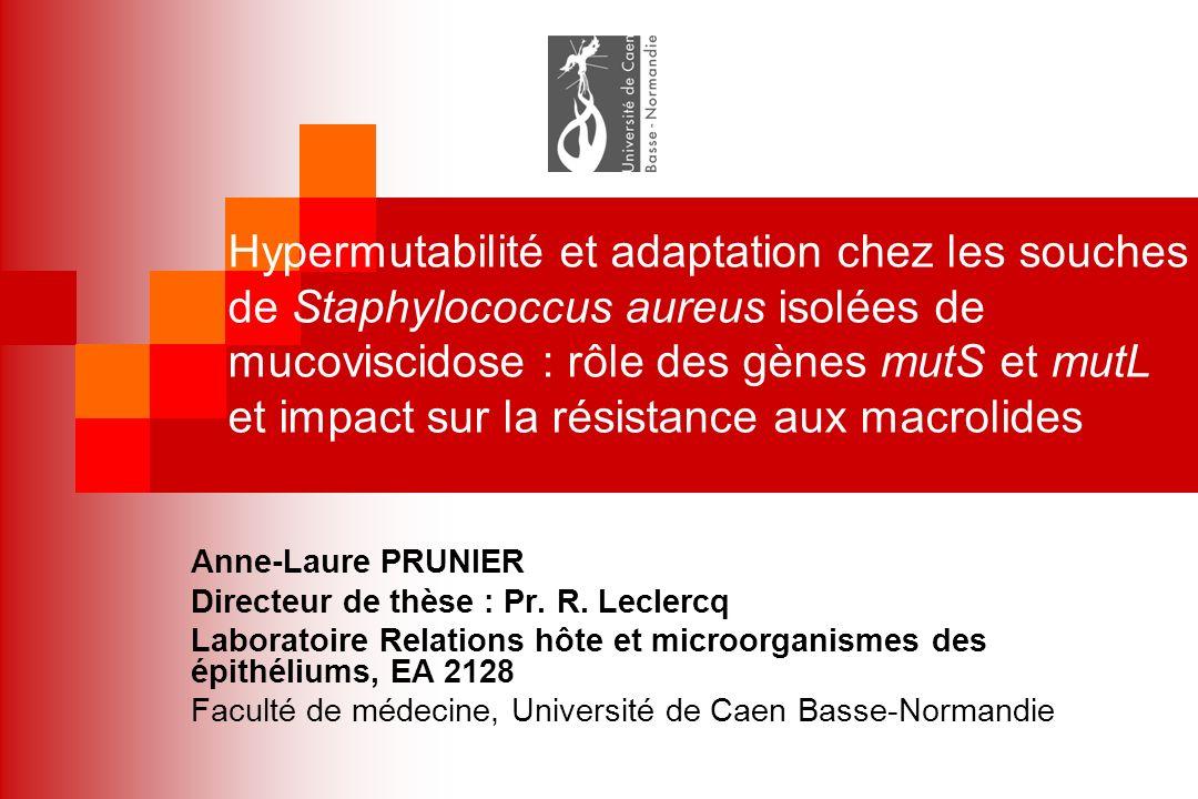 Hypermutabilité et adaptation chez les souches de Staphylococcus aureus isolées de mucoviscidose : rôle des gènes mutS et mutL et impact sur la résistance aux macrolides