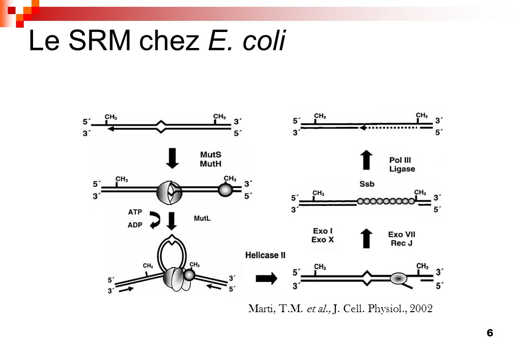 Marti, T.M. et al., J. Cell. Physiol., 2002