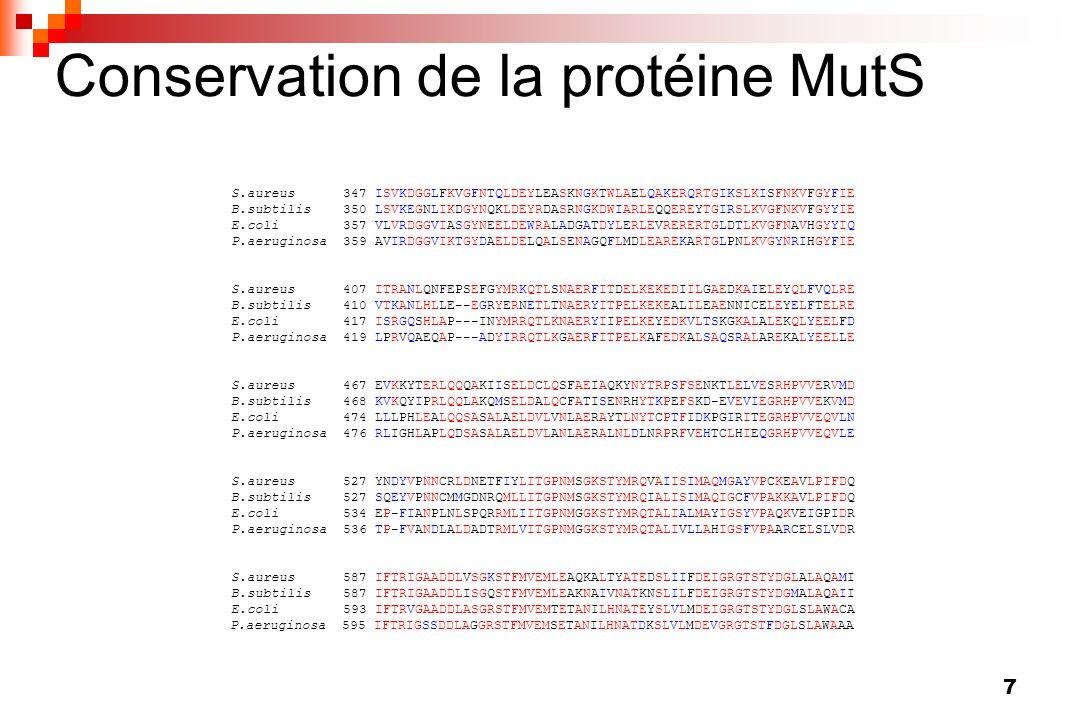 Conservation de la protéine MutS