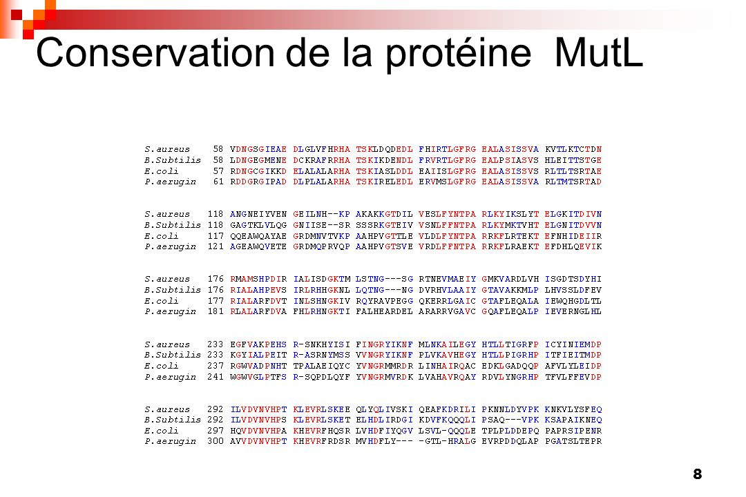 Conservation de la protéine MutL