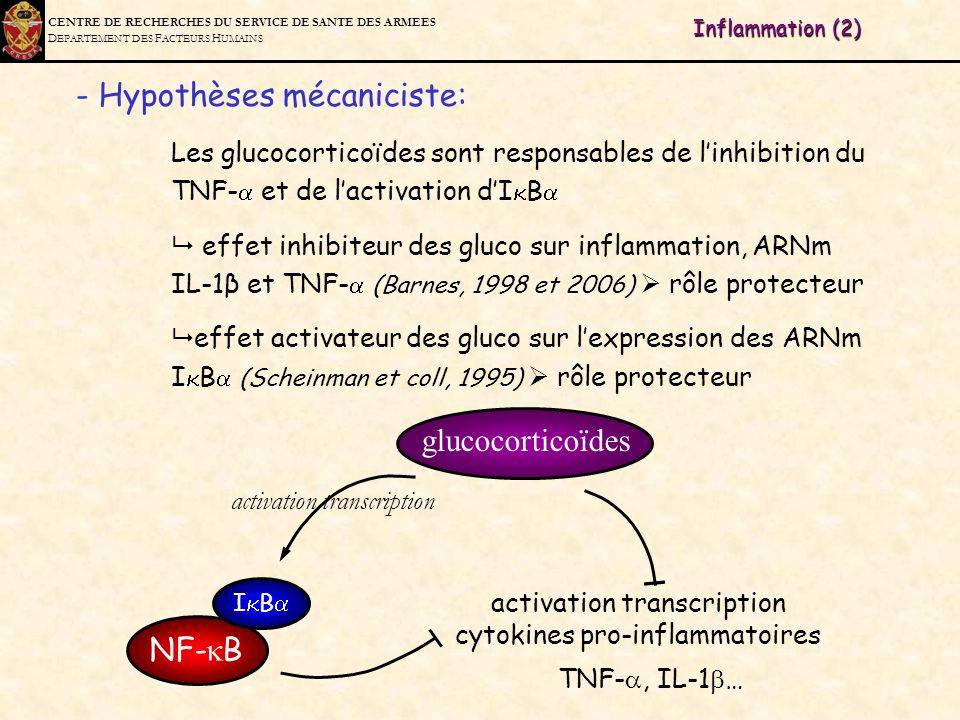 activation transcription cytokines pro-inflammatoires