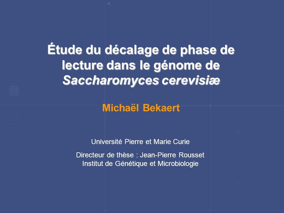 Étude du décalage de phase de lecture dans le génome de Saccharomyces cerevisiæ